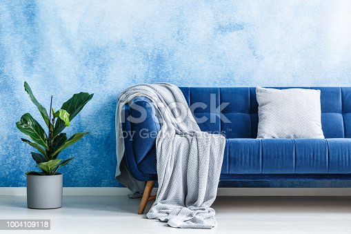 Big navy blue plush settee with gray cushion and blanket next to a green plant against ombre wall in a modern living room interior. Real photo.