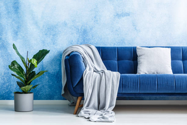Big navy blue plush settee with gray cushion and blanket next to a green plant against ombre wall in a modern living room interior. Real photo. Big navy blue plush settee with gray cushion and blanket next to a green plant against ombre wall in a modern living room interior. Real photo. fluffy stock pictures, royalty-free photos & images