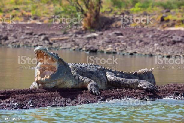 Photo of big nile crocodile, Chamo lake Falls Ethiopia