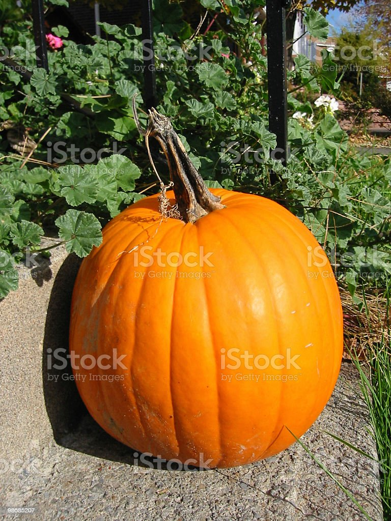 Big Orange Pumpkin royalty-free stock photo