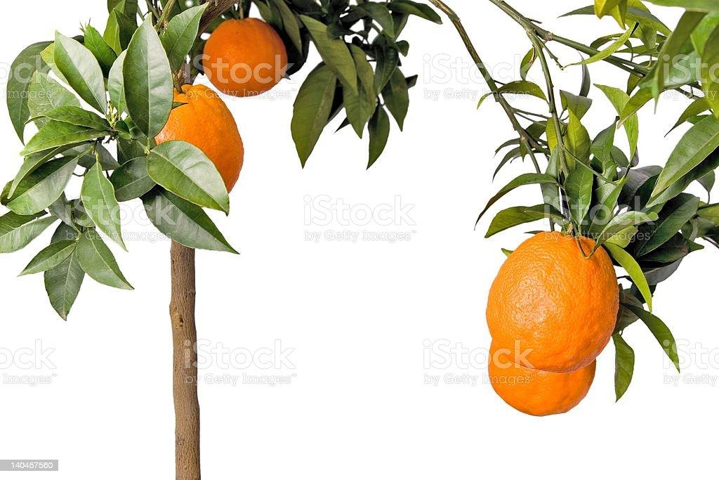 Big orange tree isolated 3D style royalty-free stock photo