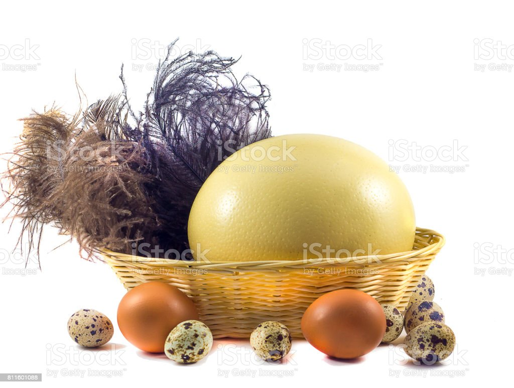 Big ostrich eggs and small chicken eggs in the basket stock photo