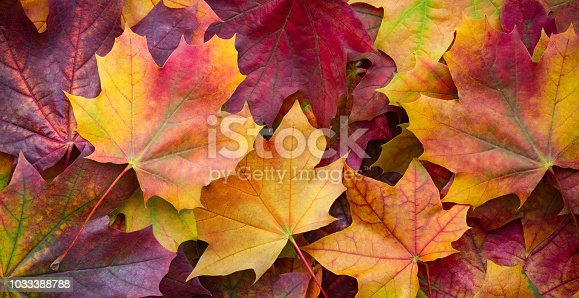 istock Big panoramic photo of multicolor autumn leaves background. Amazing multicolor autumn background 1033388788