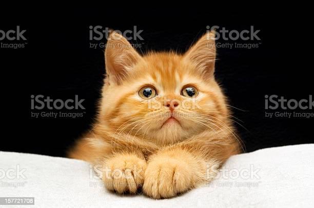 Big paws picture id157721708?b=1&k=6&m=157721708&s=612x612&h=bv8hywc6z5qwltku3 ssyb5nt va9z5xhoylno5w61g=