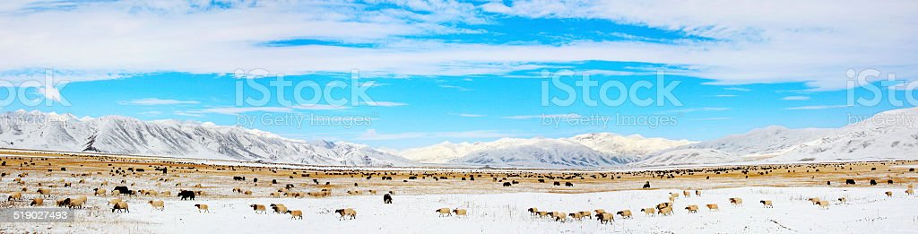 Big Picture,group of animals stock photo