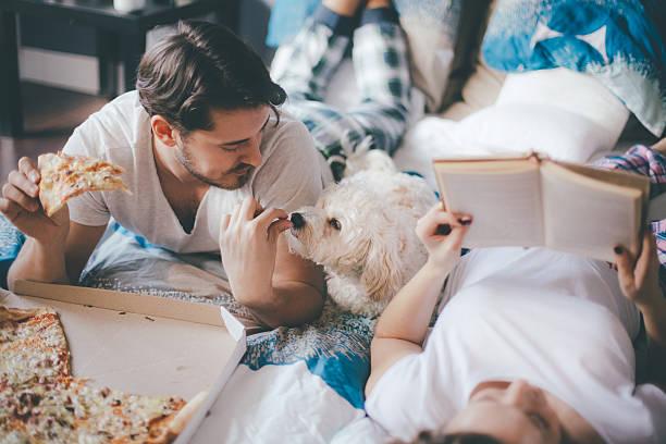 große pizza für große familie! - hunde träger stock-fotos und bilder
