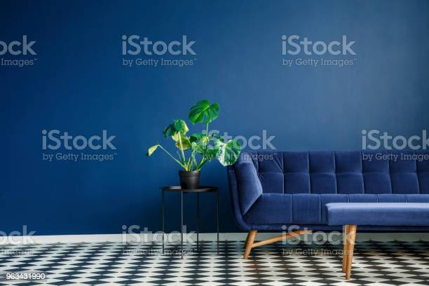 Duża Roślina Na Stołku Obok Wygodnej Kanapy I Kafelków W Kratkę Które Znajdują Się We Wnętrzu Salonu Umieść Swój Produkt - zdjęcia stockowe i więcej obrazów Niebieski