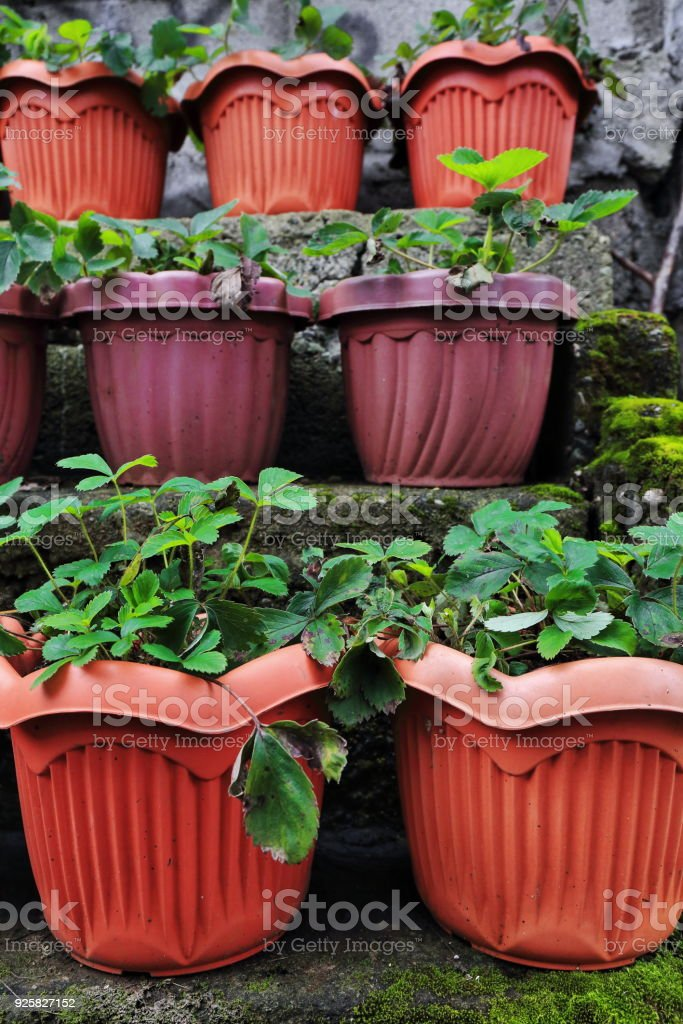 Big plastic plant pots staggered in R.Villalon street. Baguio-Benguet province-Philippines. 0251 stock photo