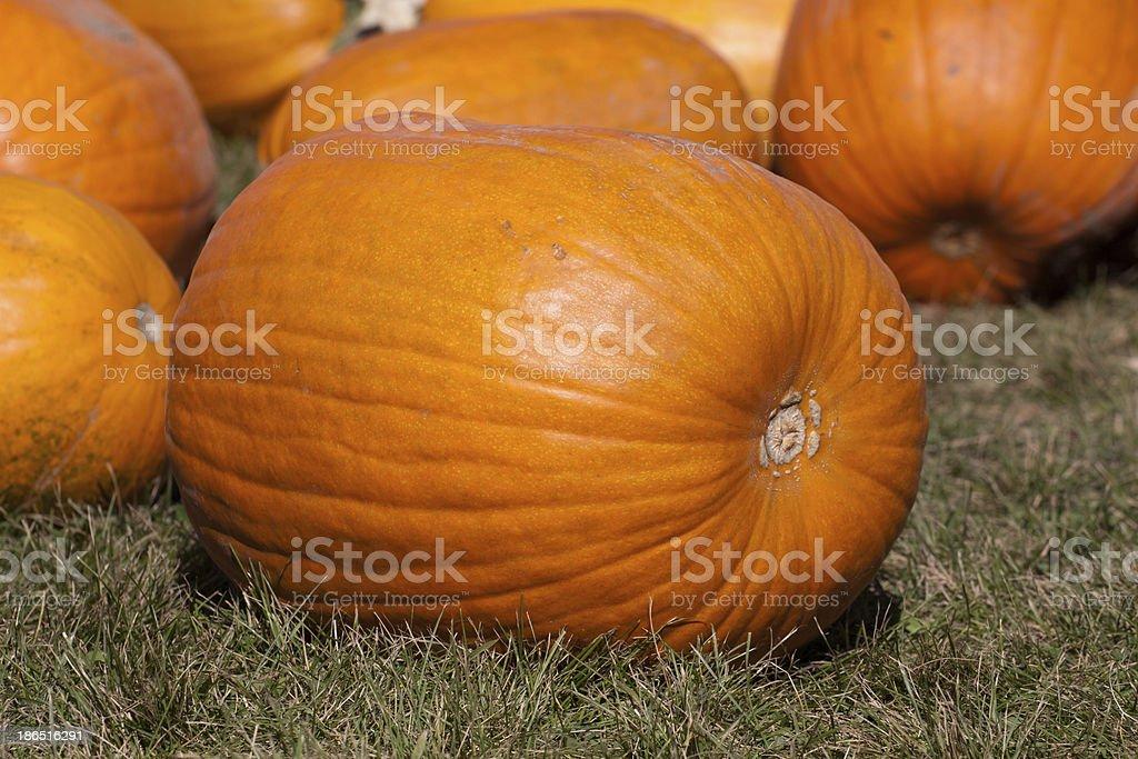 Big pumpkin royalty-free stock photo