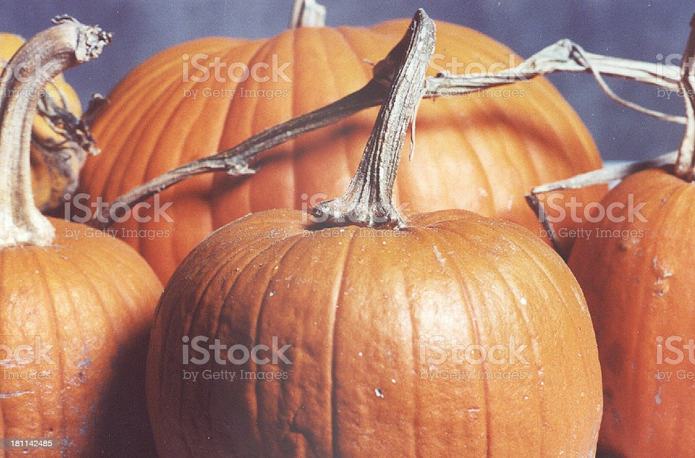 Big Pumpkins Pumpkin still life. Autumn Stock Photo