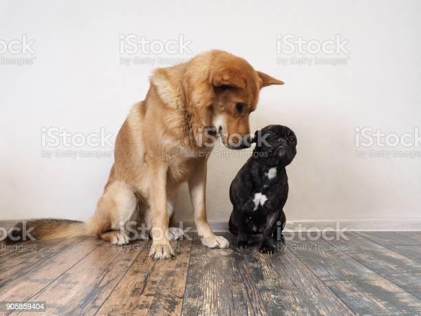 Big red dog funny meet bulldog picture id905859404?b=1&k=6&m=905859404&s=612x612&h=1esuxjjqkoe0n5xhogxjibofic8p53klp5f snh 7sq=