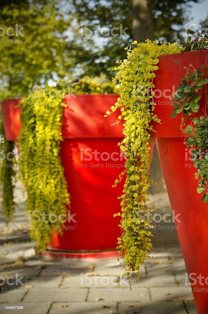 big red flower pots royalty-free stock photo