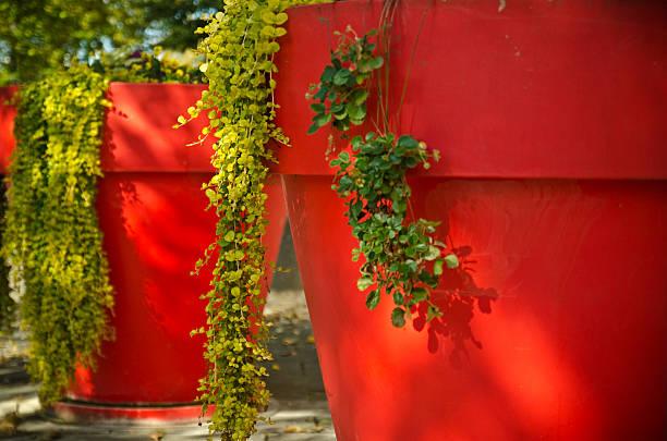 big red flower töpfe - blumentopf groß stock-fotos und bilder