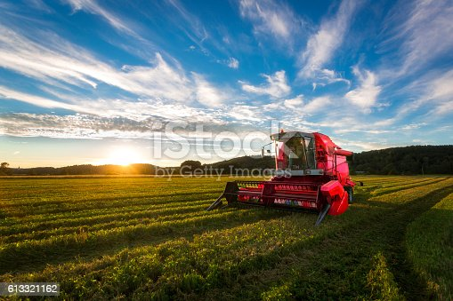 Big red combine harvester in sunset light