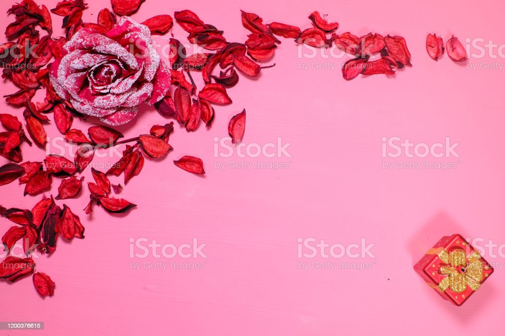 big red rose flower lies on a pink background in the petals top view concept of stvalentines day anniversary wedding banner copy space for inscriptions stock photo download image now istock big red rose flower lies on a pink background in the petals top view concept of stvalentines day anniversary wedding banner copy space for inscriptions stock photo download image now istock