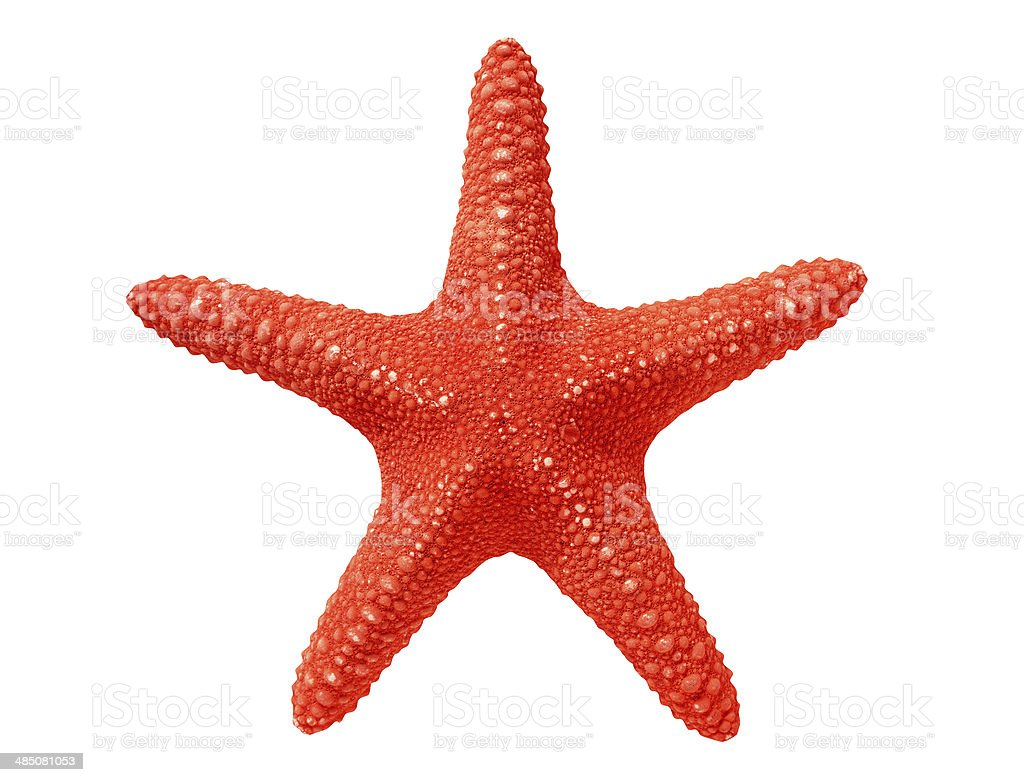 big red seastar isolated on white background stock photo