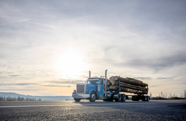 Big rig blue semi truck transporting cut logs driving on the road with sunset stock photo