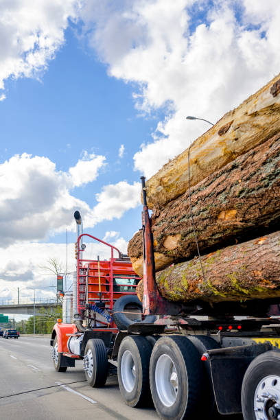 Big rig red classic powerful semi truck tractor transporting huge logs on the semi trailer driving on the wide highway road stock photo