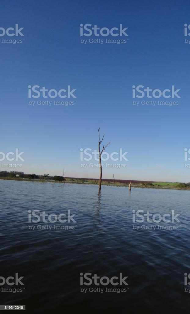 Big river - Tree - Birds stock photo