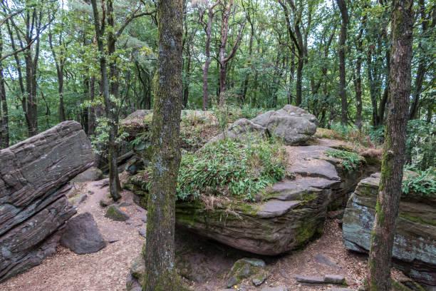 Große Felsen mitten im grünen Wald – Foto