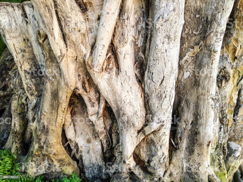 big root royalty-free stock photo