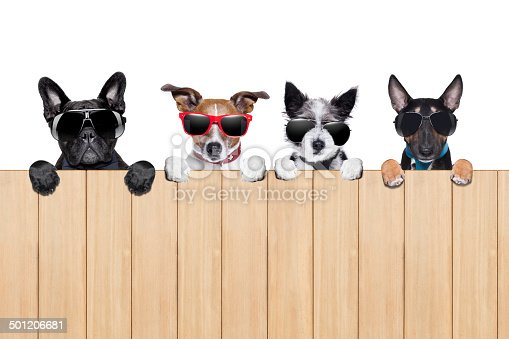 row of four dogs behind a  fence watching and stalking