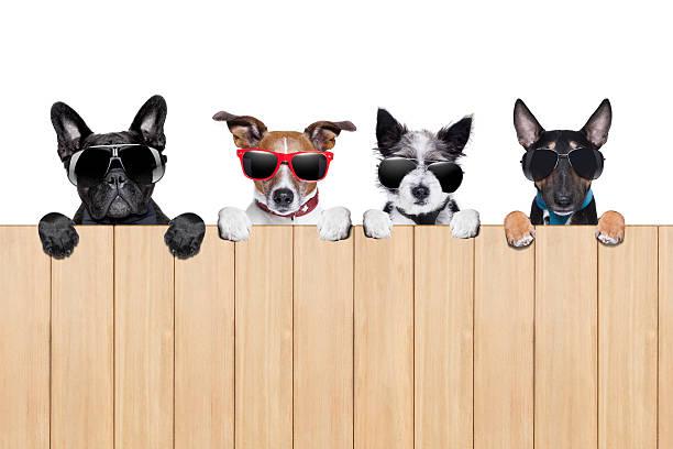 big row de chiens - indiscret photos et images de collection