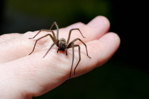 Big scary spider on hand stock photo