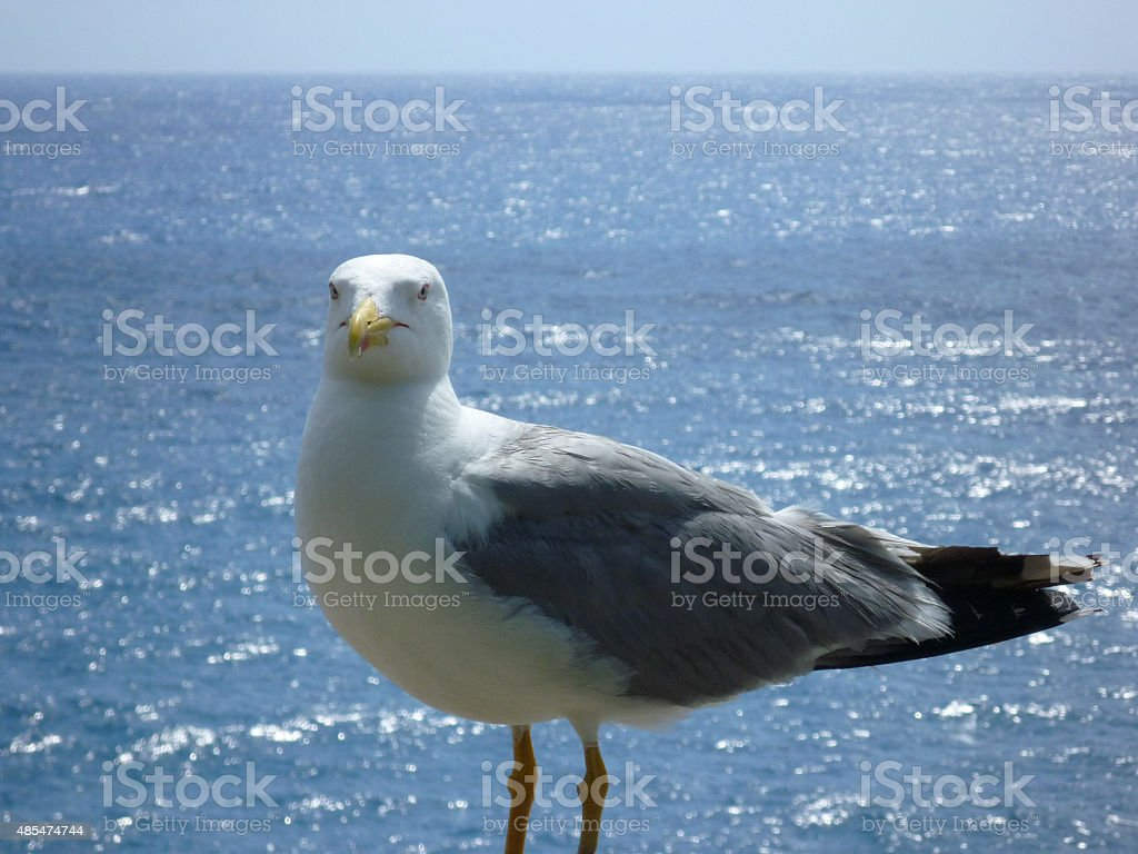Big sea gull with shimmering sea beyond stock photo