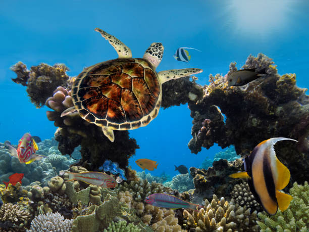 Big sea turtle underwater in ocean sea stock photo