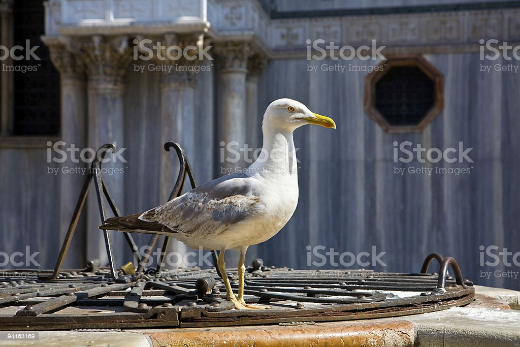 Big seagull royalty-free stock photo