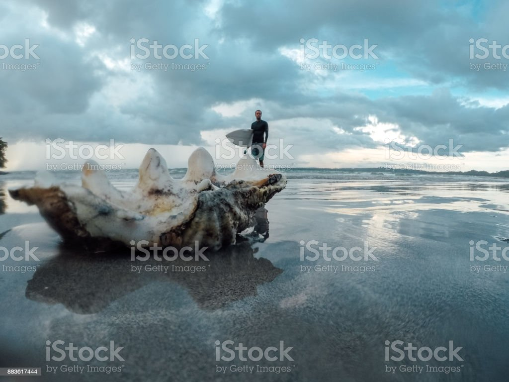 Big seashell and surfer in the distance stock photo