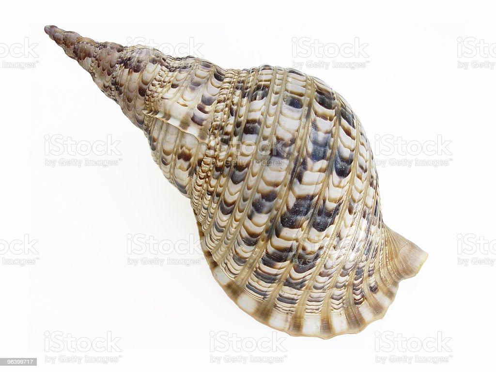 Big seashell stock photo