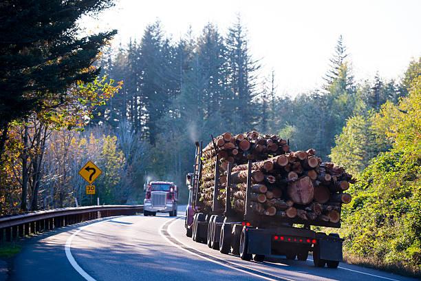 big semi truck with bunch of logs on curving road - aufgemotzte trucks stock-fotos und bilder