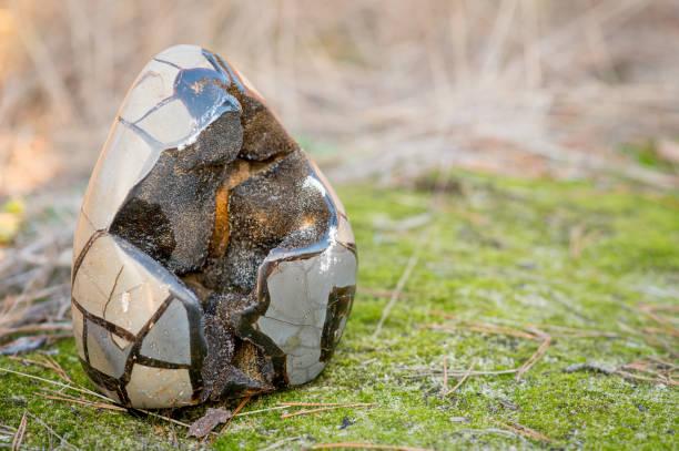 Große Septarian Stein auch genannt dragonegg – Foto