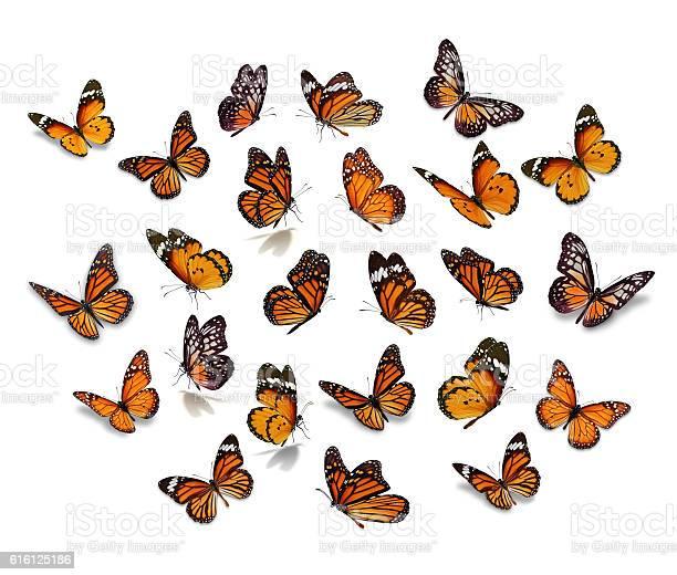 Big set monarch butterfly picture id616125186?b=1&k=6&m=616125186&s=612x612&h=xuxowwus9jsu7x0llfmna7xaos r3lummonw5s2sqgo=