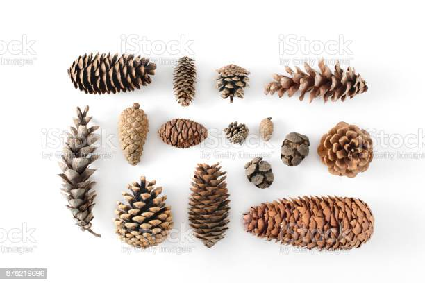 Photo of Big set of cones various coniferous trees isolated on white, view from above.