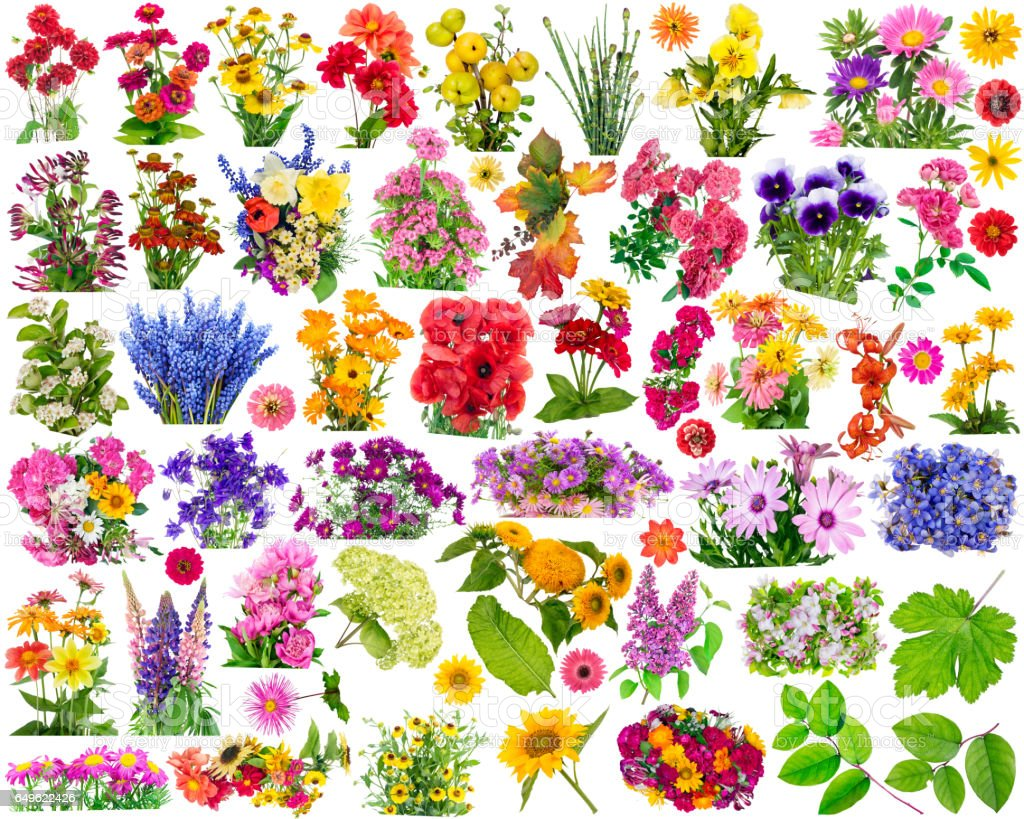 Big set of the isolated floral design elements for collages. All full size images you  find in my portfolio. stock photo