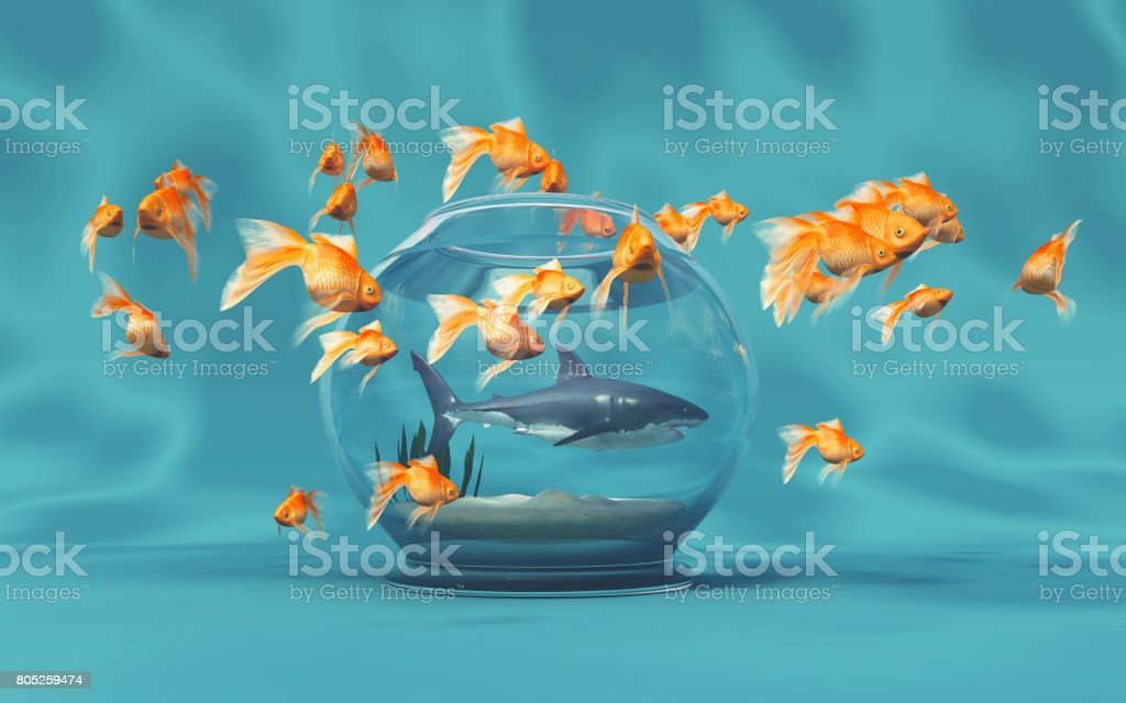 A big shark in a bowl stock photo