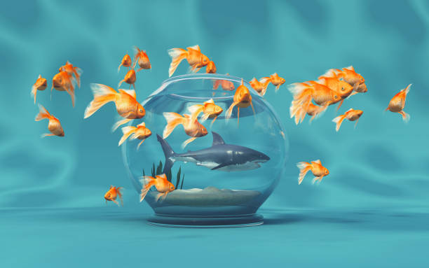 445 Golden Shark Stock Photos Pictures Royalty Free Images Istock