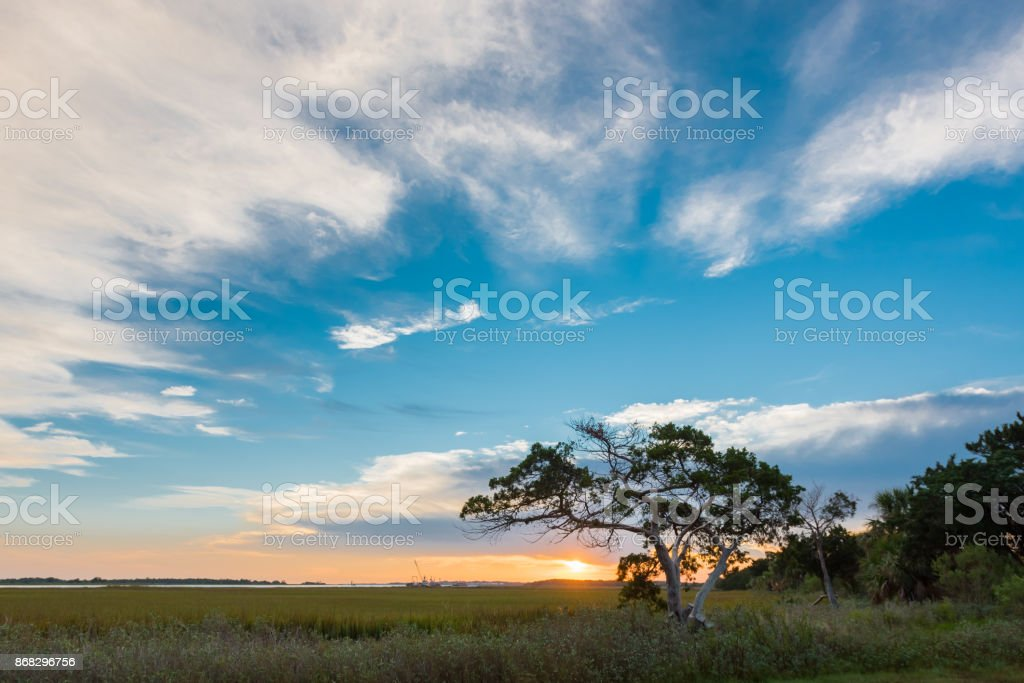 Big Sky and Small Tree on Tybee Island stock photo