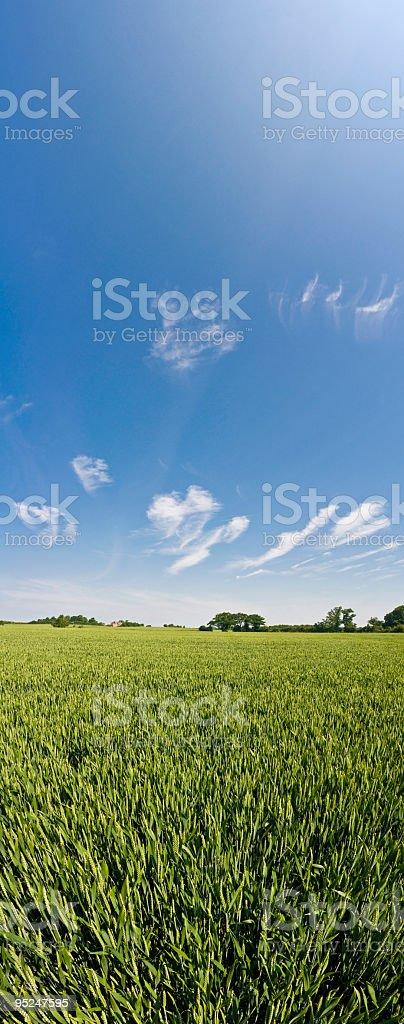Big sky green crops banner royalty-free stock photo