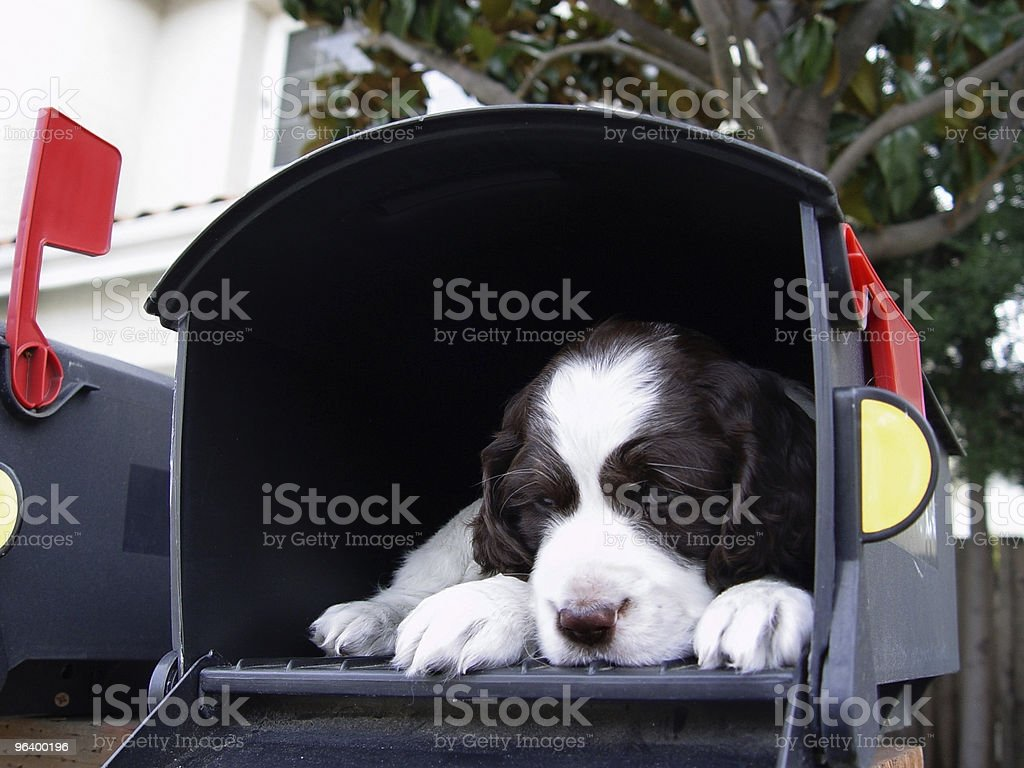 Big surprise in the mail - Royalty-free Animal Stock Photo