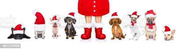 Big team row of dogs on christmas holidays picture id881228898?b=1&k=6&m=881228898&s=612x612&h=4 3e6gbjwpvfqrzmuhsjbrgwobh g4asm8gtcx n6xw=
