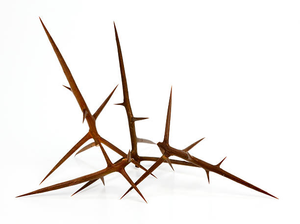 big thorns - sharp stock photos and pictures