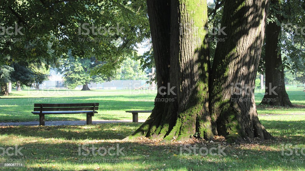 Big tree and the bank in the shadows royalty-free stock photo