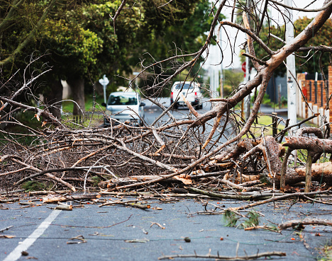 Debris from storm-damaged tree blocks the road, forcing cars to stop.