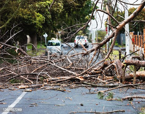 istock Big tree branch fallen after storm winds blocks street in city suburb 1265557269