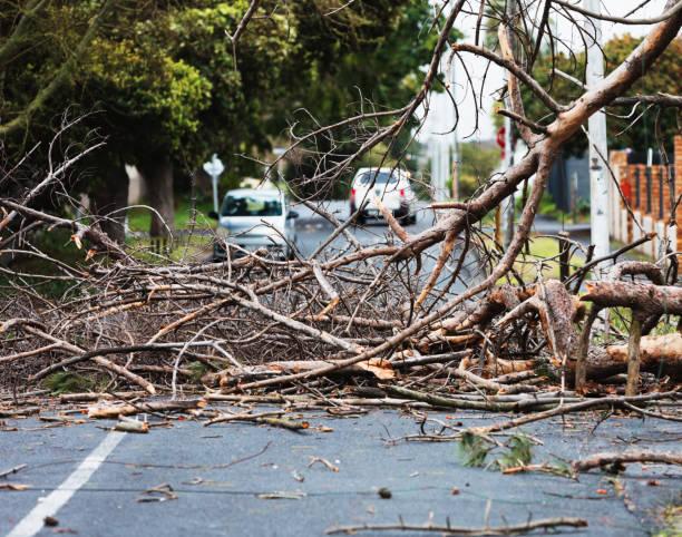 Big tree branch fallen after storm winds blocks street in city suburb stock photo