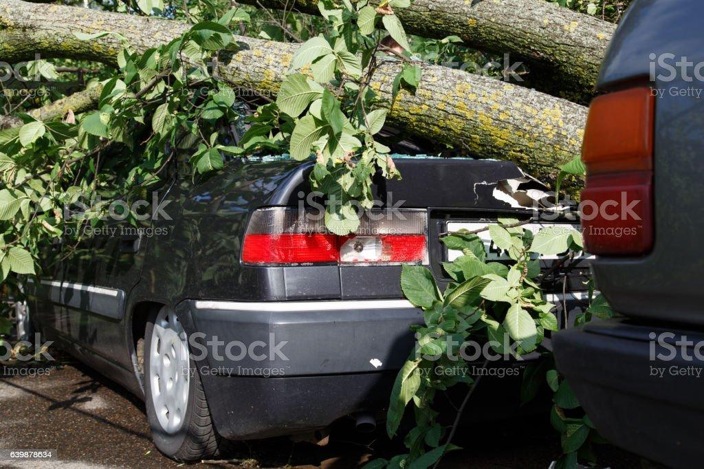 Big tree fall down on car during hurricane stock photo